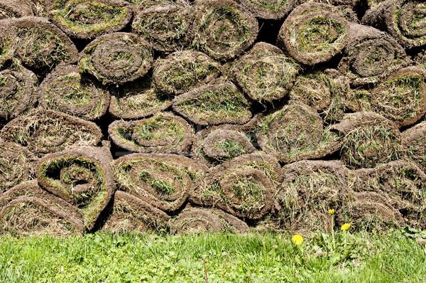 Grass Stock photo © simazoran