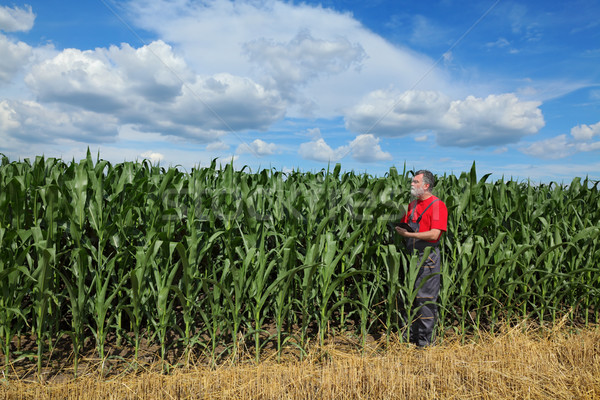 Farmer or agronomist inspect corn field using tablet Stock photo © simazoran