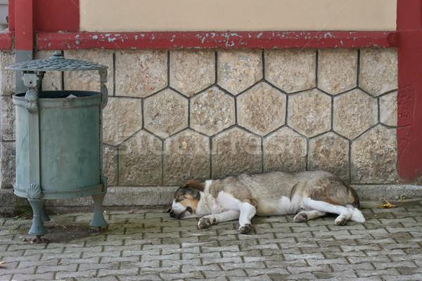 Utca kutya alszik járda hajléktalan elhagyatott Stock fotó © simazoran