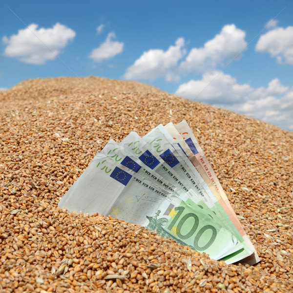 Wheat and Euro banknote agricultural concept Stock photo © simazoran