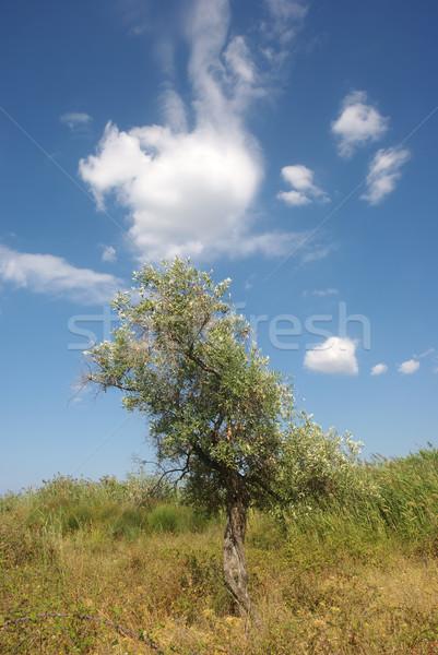 Olajfa ültet sziget Görögország felhők tájkép Stock fotó © simazoran