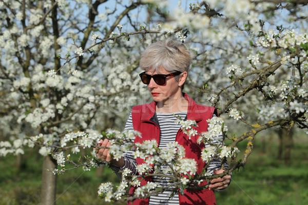 Photo stock: Agriculteur · floraison · prune · verger · Homme