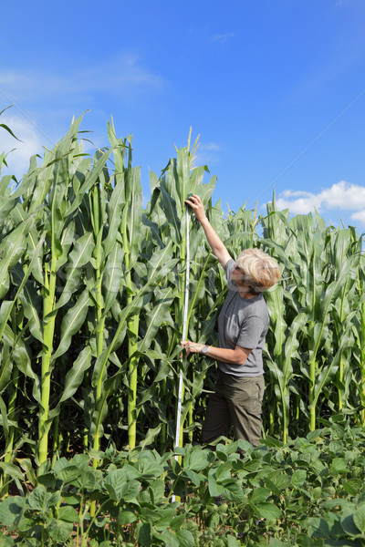 Agronomy Stock photo © simazoran