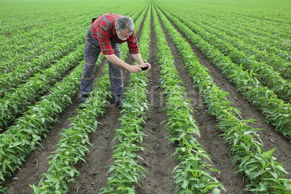 Tarım sahne çiftçi soya alan tarım Stok fotoğraf © simazoran