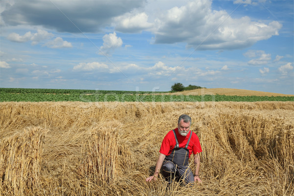 Photo stock: Agriculture · désespérée · agriculteur · endommagé · tempête