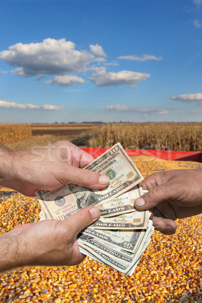 Agricultural concept, corn crop and money in hands Stock photo © simazoran