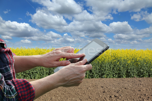 Farmer or agronomist inspecting blossoming rapeseed field Stock photo © simazoran