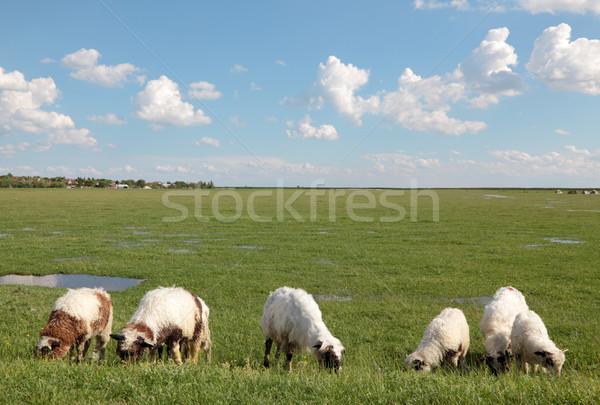 Domestic animals Stock photo © simazoran