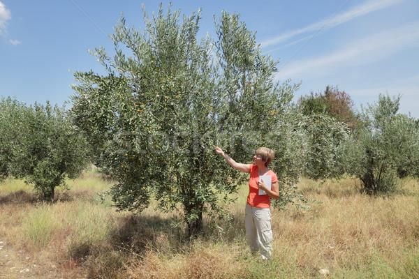 Agrártudomány női mezőgazdasági szakértő minőség olajfa Stock fotó © simazoran