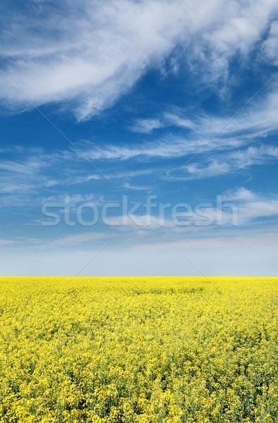 Agriculture, rapeseed Stock photo © simazoran