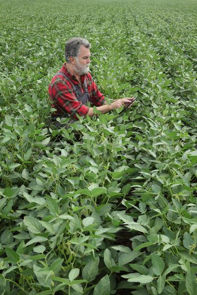 Farmer examining soy bean plants field Stock photo © simazoran