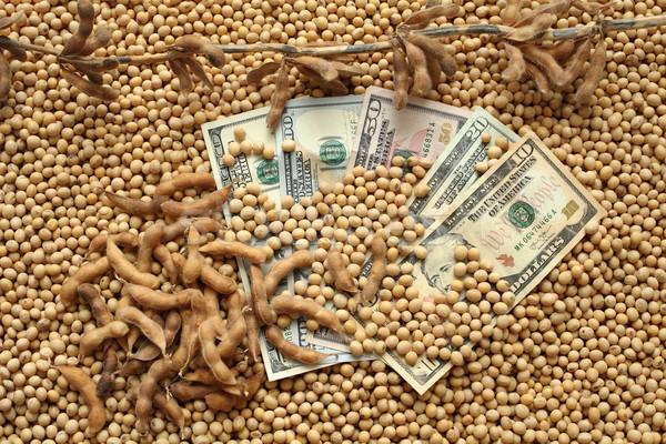 Rolniczy ceny soja fasola Zdjęcia stock © simazoran