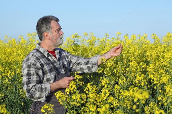 農家 調べる 開花 フィールド タブレット 手 ストックフォト © simazoran