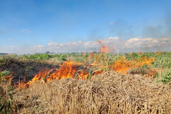 Fire in field Stock photo © simazoran