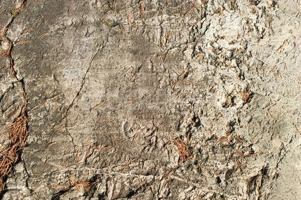 岩 テクスチャ オスロ ノルウェー 抽象的な 背景 ストックフォト © SimpleFoto