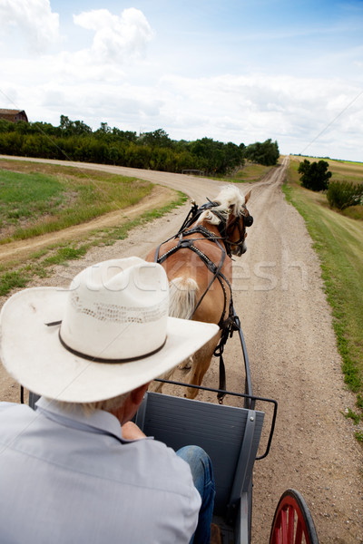 Horse and Buggy Stock photo © SimpleFoto
