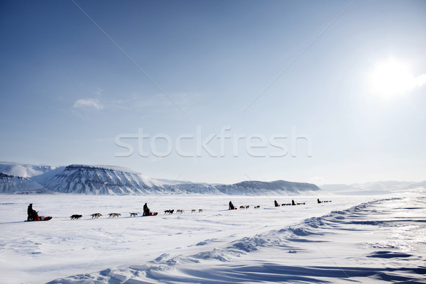 Hond expeditie winter landschap man Stockfoto © SimpleFoto