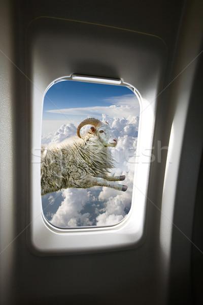 Pływające owiec na zewnątrz płaszczyzny okno świetle Zdjęcia stock © SimpleFoto