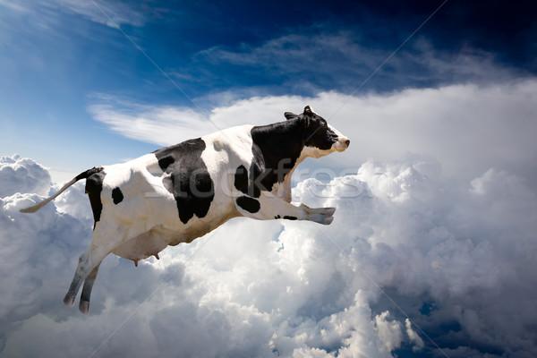 Stock fotó: Repülés · tehén · szuper · felhők · farm · felhő