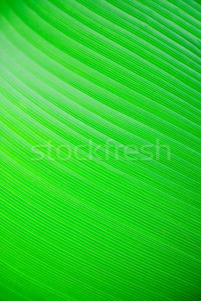 Liści tropikalnych tekstury charakter tle Zdjęcia stock © SimpleFoto
