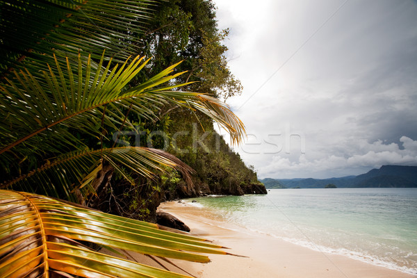 Tropical Beach Stock photo © SimpleFoto