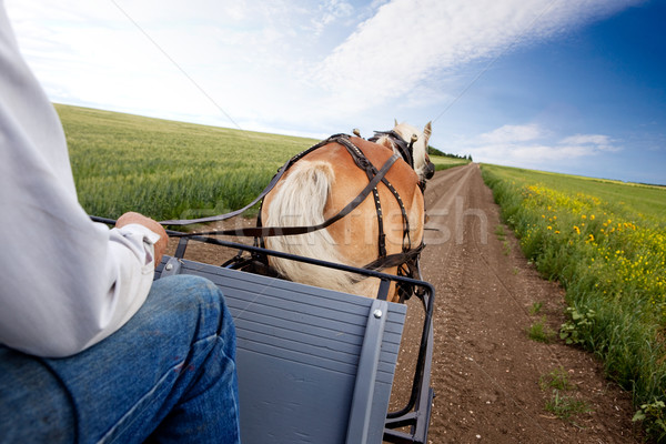 Horse and Cart Stock photo © SimpleFoto