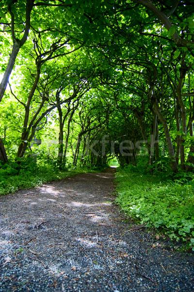 Mystiker Weg mystisch Bäume Garten grünen Stock foto © SimpleFoto