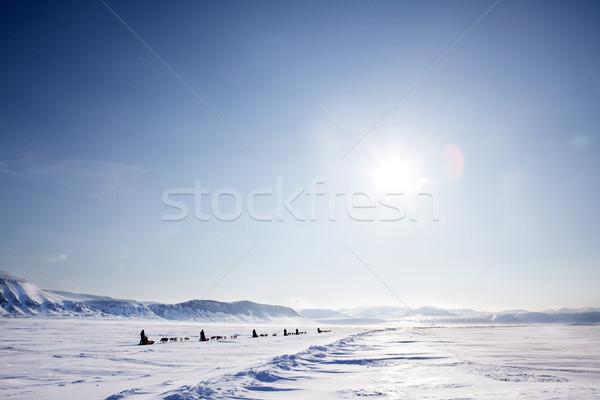 Kutya expedíció szám terméketlen tél tájkép Stock fotó © SimpleFoto