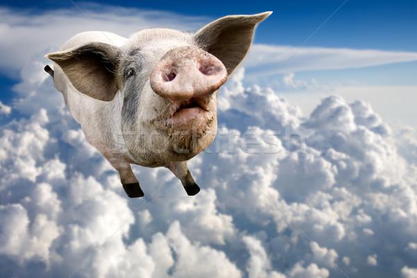 Flying свинья облака небе улыбка синий Сток-фото © SimpleFoto