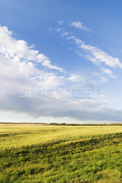 Préri égbolt tájkép élénk fű farm Stock fotó © SimpleFoto