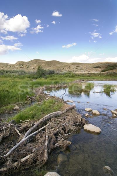 Stock photo: Beaver Dam