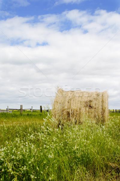 Hooi borgtocht groot prairie landschap hemel Stockfoto © SimpleFoto