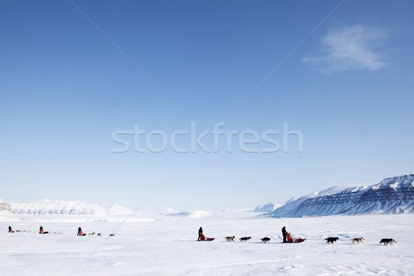 собака числа бесплодный зима пейзаж человека Сток-фото © SimpleFoto