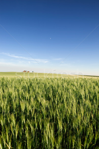 Prairie Farmland Stock photo © SimpleFoto
