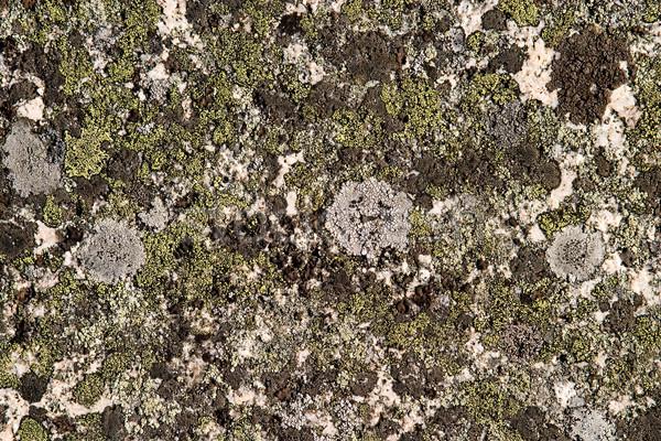 Rock grzyb tekstury mech zielone kamień Zdjęcia stock © SimpleFoto