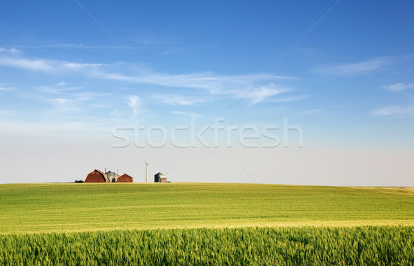 Photo stock: Prairie · paysage · blé · ferme · horizon