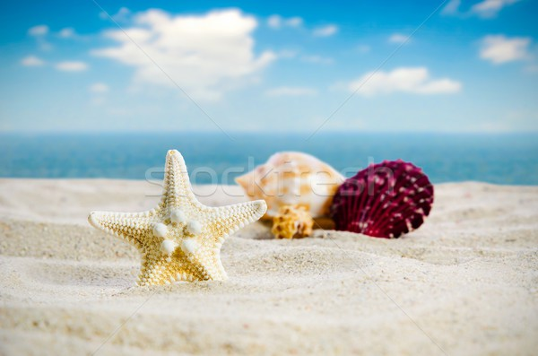 Starfish with few shells on the golden beach Stock photo © simpson33