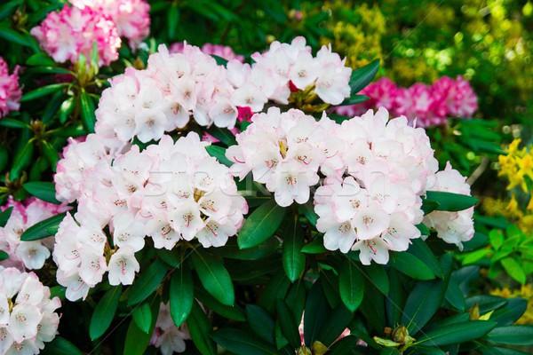 Beautiful park garden in spring.  Stock photo © simpson33