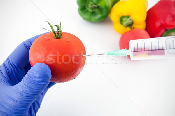 Man with gloves working with tomato in genetic engineering labor Stock photo © simpson33