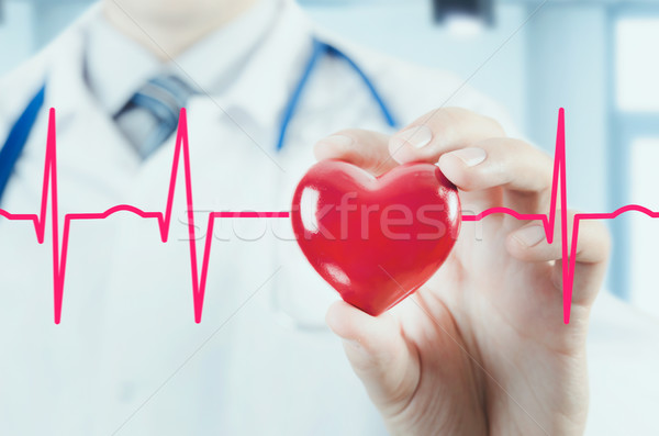 Cardiologist holding heart 3D model. Concept with cardiogram Stock photo © simpson33