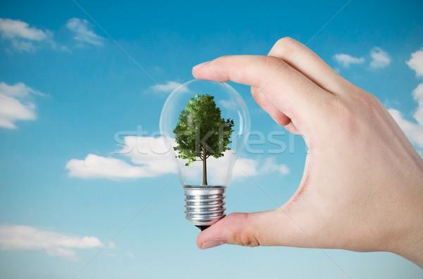エネルギー効率 抽象的な ツリー 電球 自然 技術 ストックフォト © simpson33