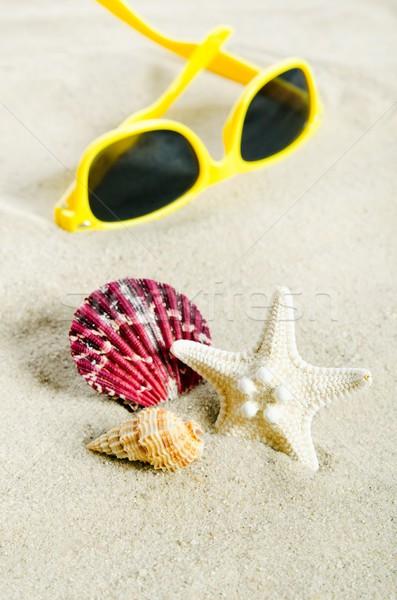 Pochi conchiglie vacanze Foto d'archivio © simpson33