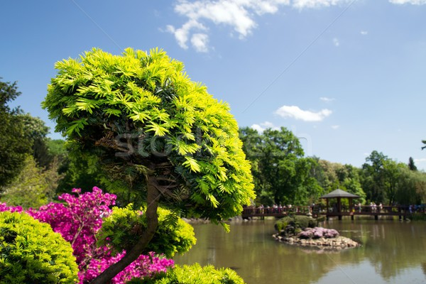 Beautiful flora in japanese garden  Stock photo © simpson33