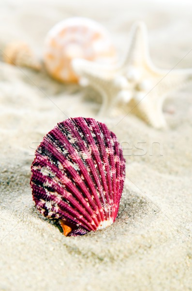 Stock photo: Few shells on the golden beach. Holiday composition close up