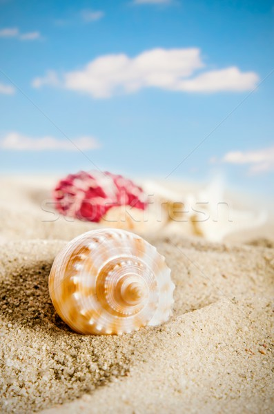 Few shells on the golden beach. Blue sky in background Stock photo © simpson33