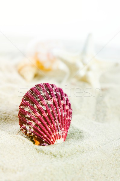 Few shells on the golden beach. Holiday composition close up Stock photo © simpson33