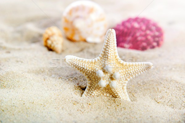 Starfish with few shells on the golden beach. Stock photo © simpson33
