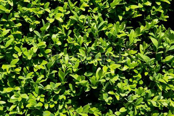 зеленая трава саду флора весны аннотация Сток-фото © simpson33
