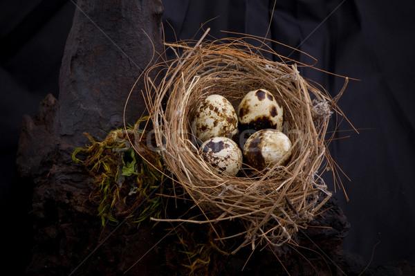 Birds nest Stock photo © sippakorn