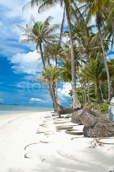 Samui Island Stock photo © sippakorn